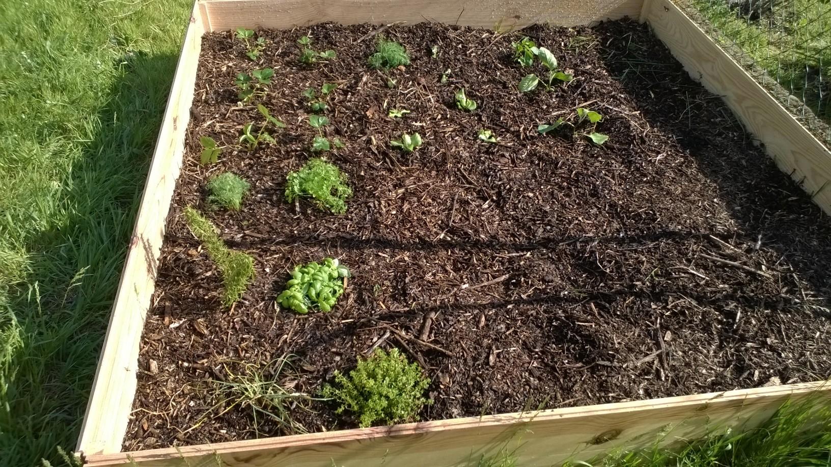 Mon propre jardin un beau potager sans entretien c 39 est for Entretien poivron jardin