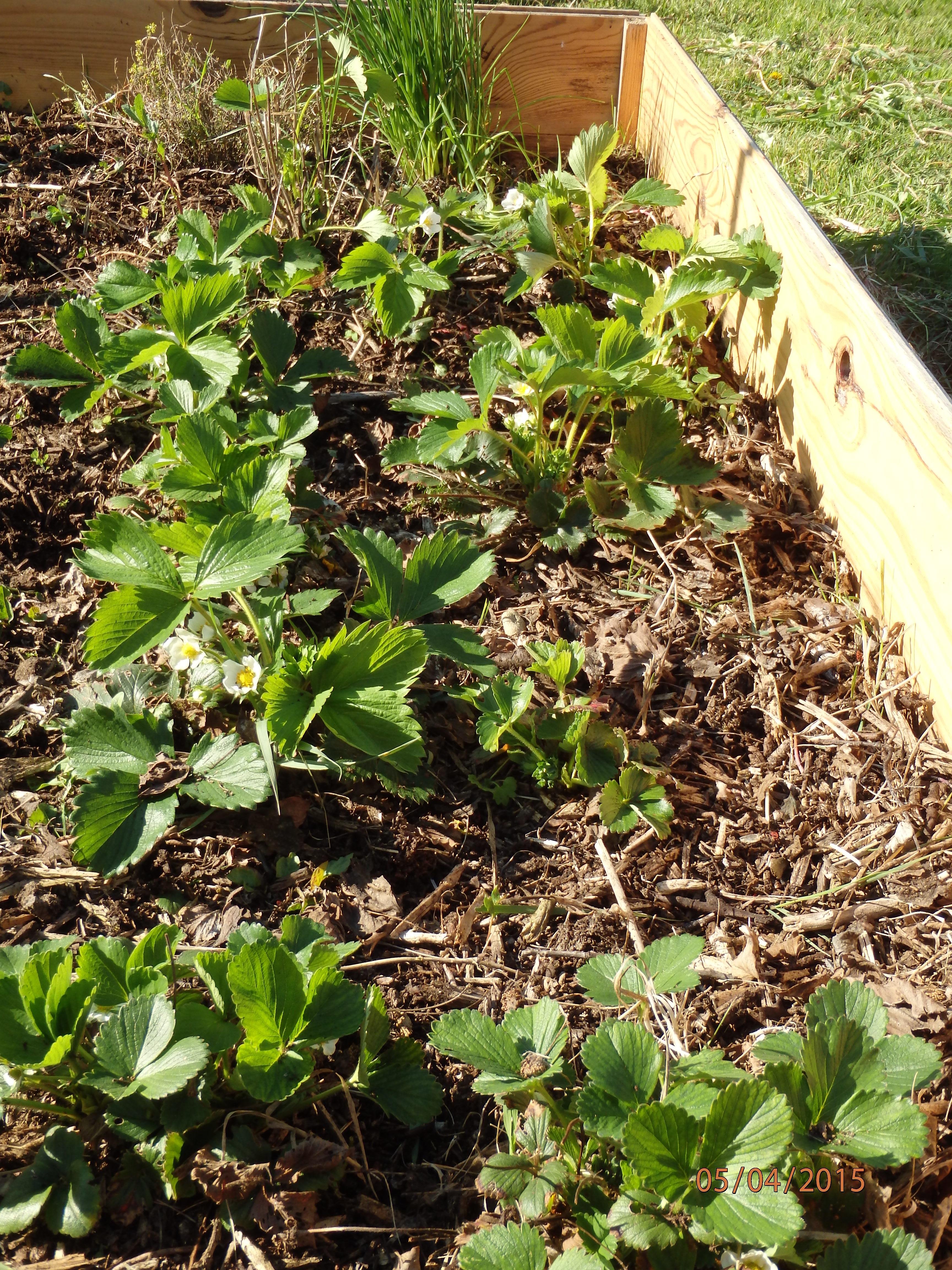 Mon propre jardin un beau potager sans entretien c 39 est for Joli jardin sans entretien
